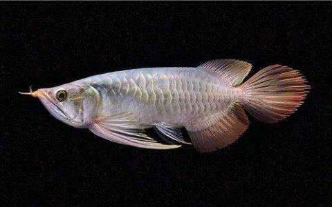 北京卖鱼的市场在哪里,这个北京鱼市观赏鱼玩家常去