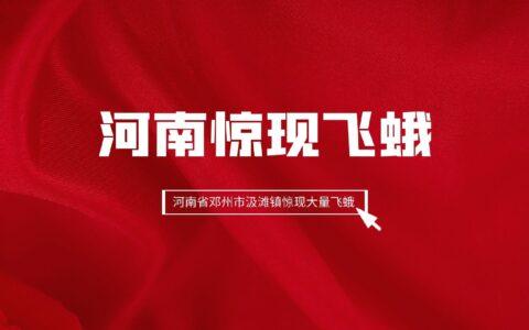 河南惊现飞蛾丨河南省邓州市汲滩镇惊现大量飞蛾